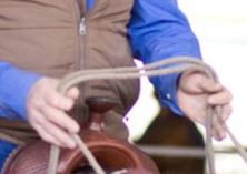 Person holding reins